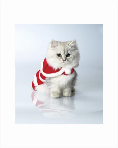 Studio shot of cat by Corbis