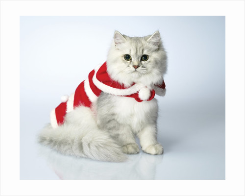 Studio shot of cat in christmas outfit by Corbis