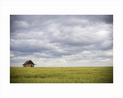 Barley Field and Abandoned Farmhouse, Raymore, Saskatchewan, Canada by Corbis