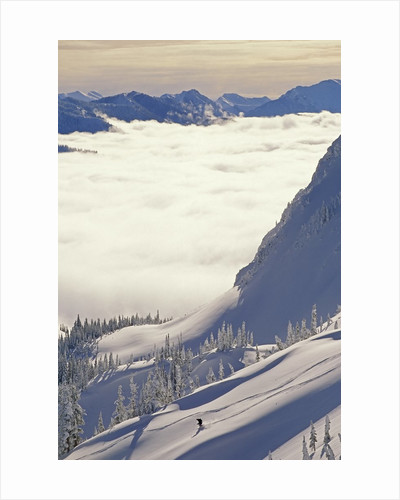 Skier Skiing Fresh Deep Powder in Backcountry Near Fernie, East Kootenays, British Columbia, Canada. by Corbis