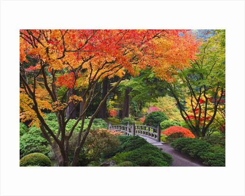 Fall colors at Portland Japanese Gardens, Portland Oregon by Corbis