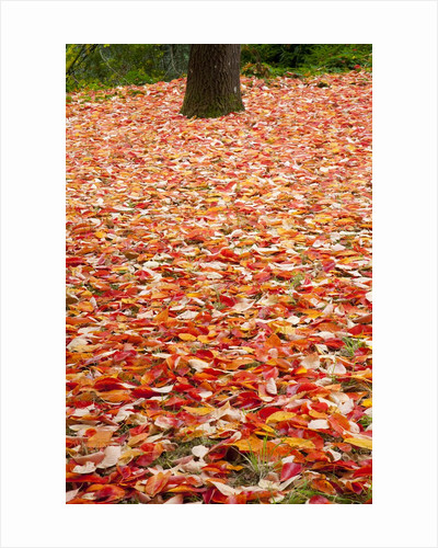 Tree trunk surrounded by fallen leaves, Portland Japanese Gardens, Portland Oregon by Corbis