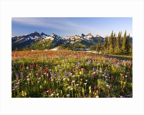 Tatoosh range behind wildflowers in field by Corbis