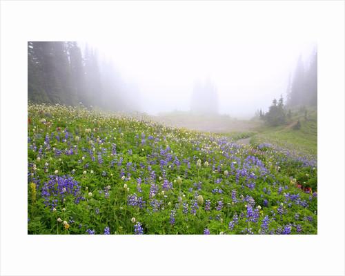 Morning fog and wildflowers, Mount Rainier National Park, Washington State by Corbis