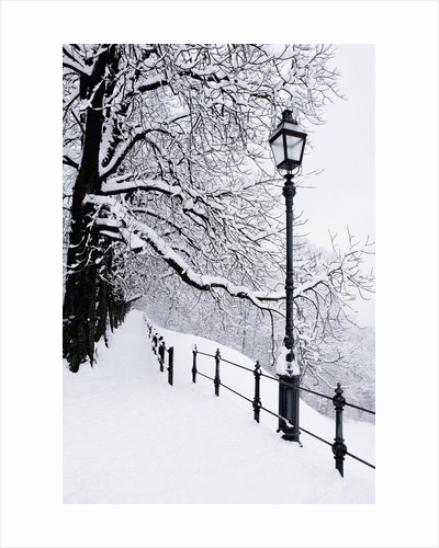 Trees and lamp post in snow by Corbis