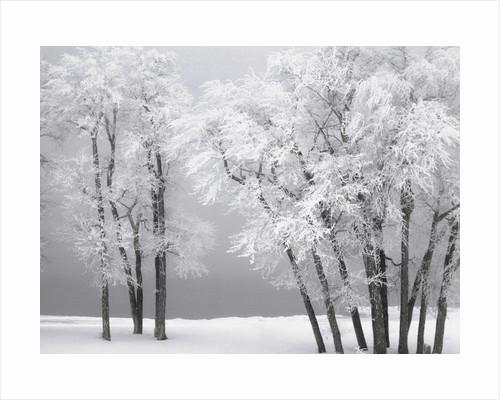 Foggy winter day at Bear Lake by Corbis