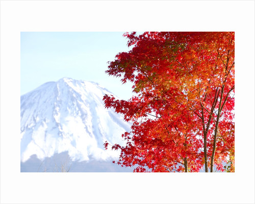 Mt. Fuji and Japanese maple tree in autumn, Yamanashi Prefecture, Honshu, Japan by Corbis