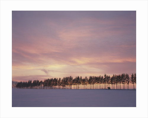 Sunrise over a snow covered field in Hokkaido, Japan by Corbis