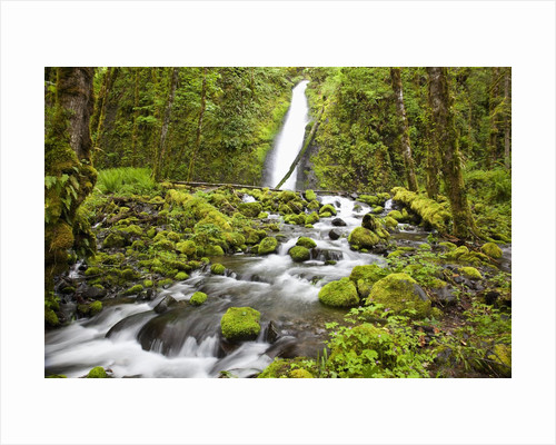 Ruckel Creek Falls in Columbia River Gorge National Scenic Area by Corbis