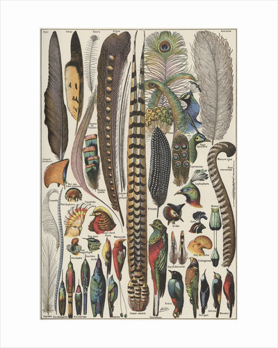 Feathers and bird specimens by Corbis