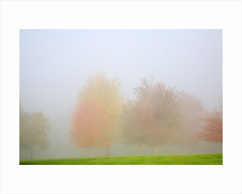 Fall trees shrouded in mist by Corbis