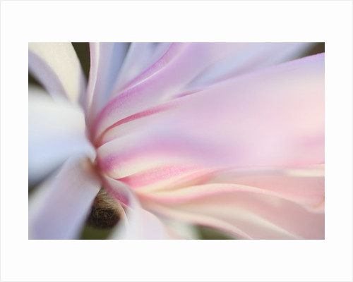 Close-up view of a flower by Corbis