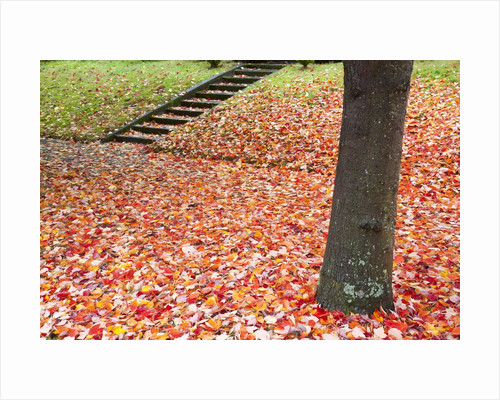 Autumn leaves on the ground by Corbis