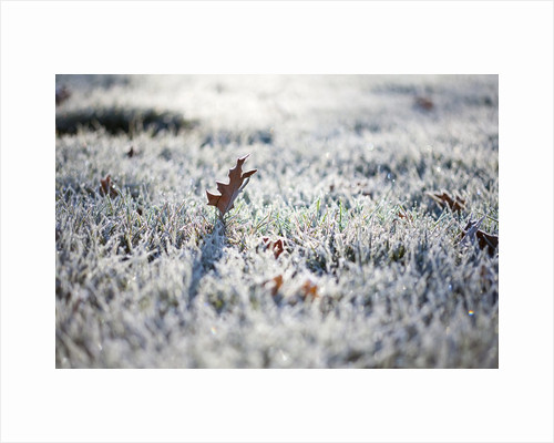 Frost on grass and autumn leaves by Corbis