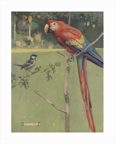 Illustration of macaw and sparrow by Corbis