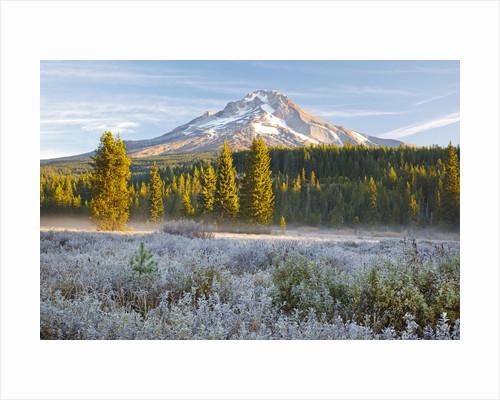 morning frost in meadow, Mt. Hood, Oregon. by Corbis