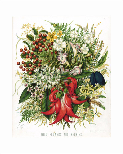Wild Flowers and Berries by Corbis