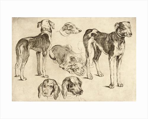 Studies of Hounds by Wenceslas Hollar