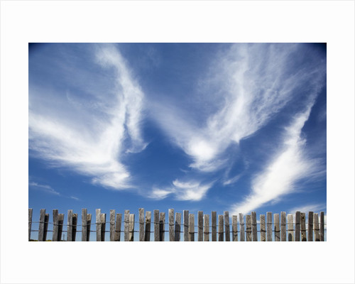 Cirrus clouds in summer sky by Corbis