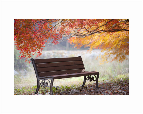 Lonely bench under the autumn tree by Corbis