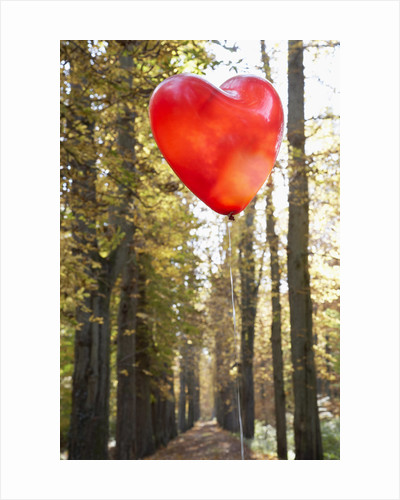 Red balloon in shape of heart in autumn forest by Corbis