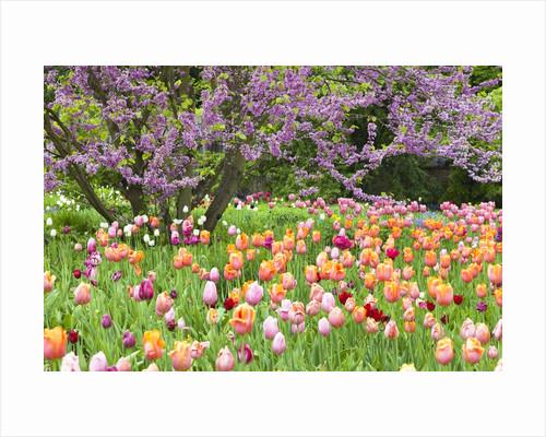 Blooming garden by Corbis