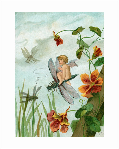 Winged fairy riding a dragonfly near nasturtium blooms by Corbis