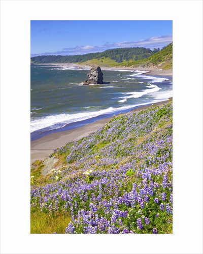 Lupine wildflowers and rock formations at Cape Blanco, South Oregon Coast, Pacific Ocean, Pacific No by Corbis