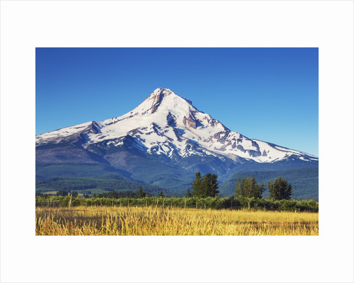 Landscape with Mount Hood by Corbis