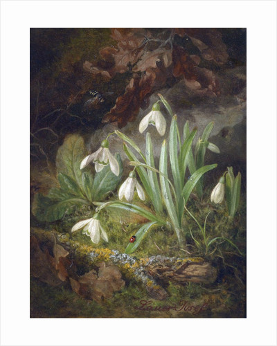 Forest Floor with Snowdrops by Josef Lauer