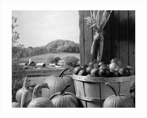1960s barn door corn apples pumpkins autumn harvest time by Corbis