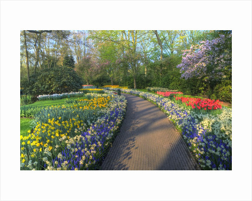 Springtime colors and pathway in Kuekenhof gardens with Hyacinths, Daffodils, Tulips Holland (Nether by Corbis
