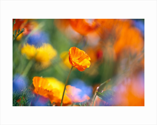 Close-up of wildflowers by Corbis