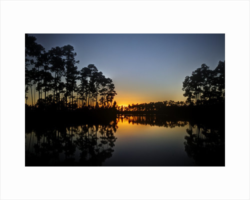 Sunset in Long Pine area of Everglades NP by Corbis