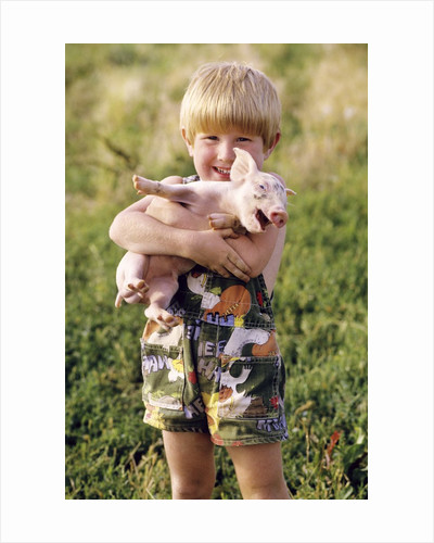 smiling Blond 4 Year Old Boy Holding Squealing Baby Pig by Corbis
