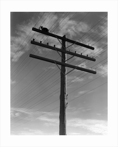 1940s Cat Sitting On A Power Line Telephone Pole Stranded Alone Outdoor by Corbis