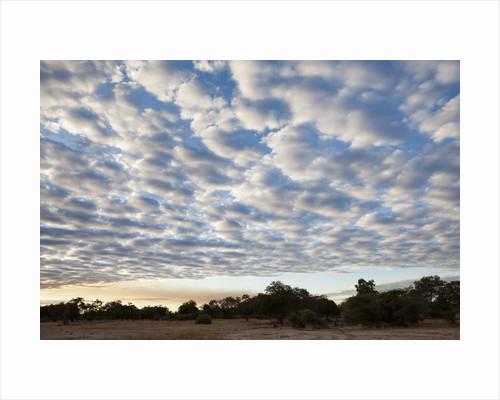 South Luwangwe National Park by Corbis