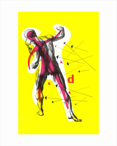 Poster of Arrows Pointing to Muscles by Corbis