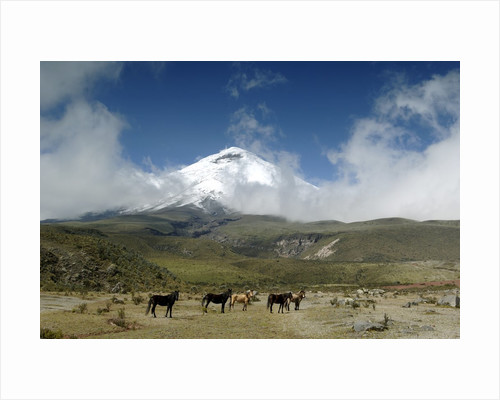 Horses in Cotopaxi National Park by Corbis