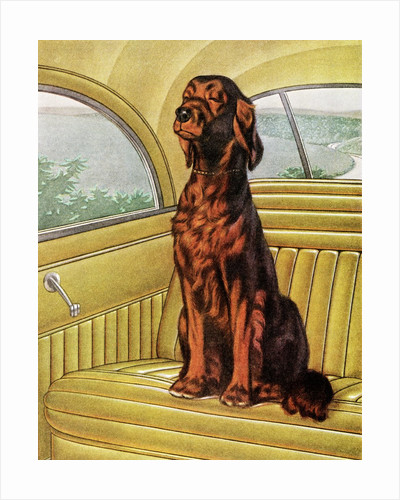 Pampered Irish Setter Sitting in a Car by Corbis