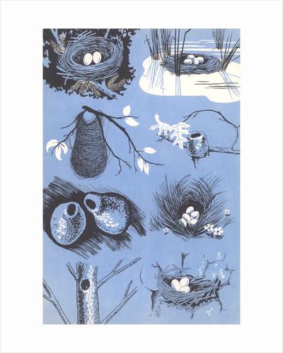 Bird's nests by Corbis