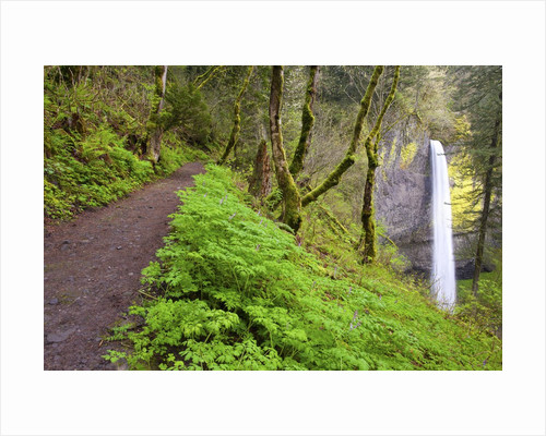 Spring Latourell Falls, Columbia River Gorge National Scenic Area, Oregon by Corbis