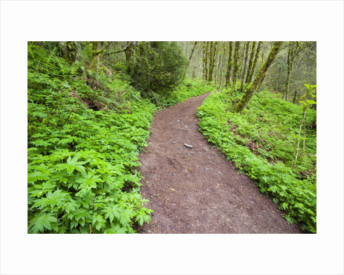 Spring along trail, Columbia River Gorge National Scenic Area, Oregon by Corbis