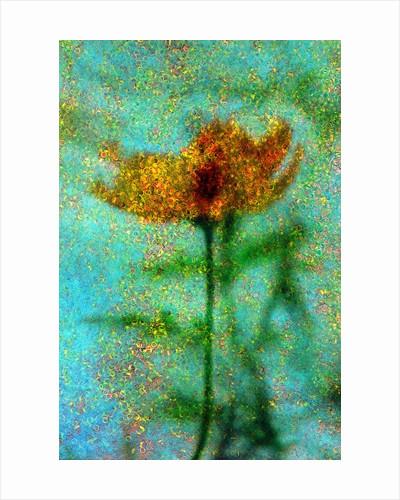 Yellow Flower. by Corbis