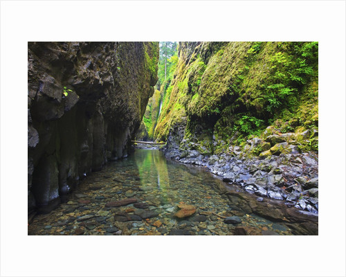 Oneonta creek in Oneonta Gorge, Columbia River National Scenic Area, Oregon by Corbis