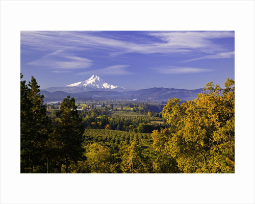 Mt. Hood, Hood River Valley, Columbia River Gorge National Scenic Area, Oregon by Corbis