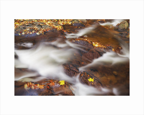 Forest brook with maple leaves in autumn by Corbis