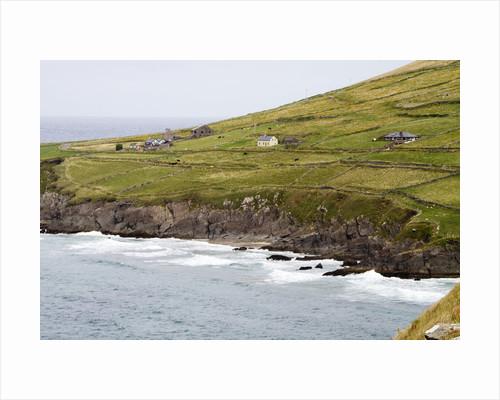Animals graze alongside the Atlantic Ocean by Corbis
