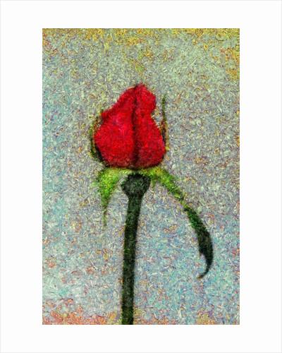 Rosebud by Corbis
