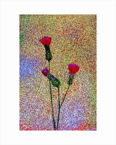 Little Flowers by Corbis